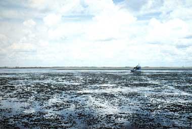 Photo of Lake Okeechobee