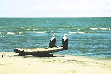 Photo of Lake Turkana