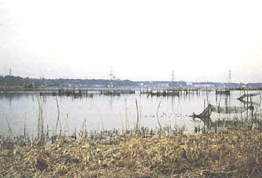 Photo of Tega-numa