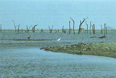 Photo of Lake Parakrama