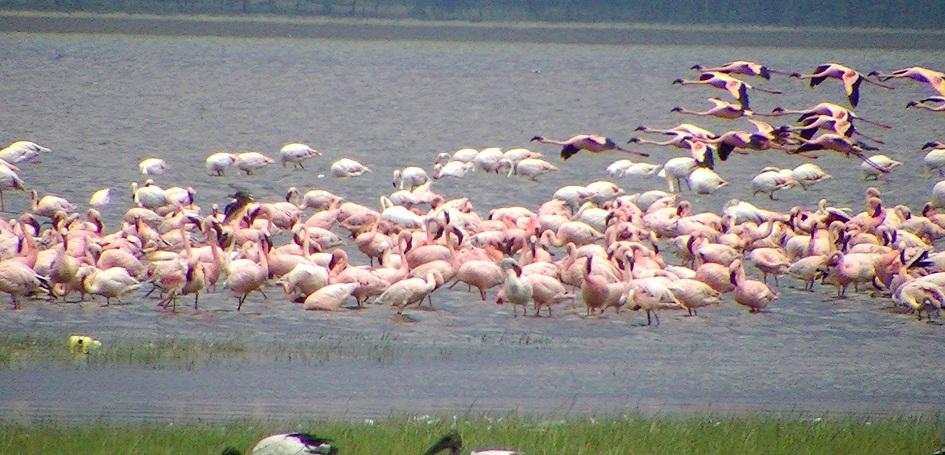 Photo of Lake Nakuru
